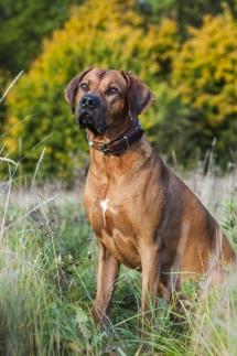 Laura-Fiederer-Fotografie-Ried-Tierfotografie-Hund-1