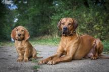 Laura-Fiederer Fotografie-Tierfotografie-Riedstadt-Hunde-1