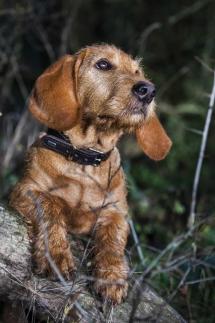 Laura-Fiederer Fotografie-Tierfotografie-Riedstadt-Hunde-2