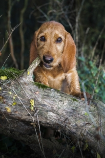 Laura-Fiederer Fotografie-Tierfotografie-Riedstadt-Hunde-3