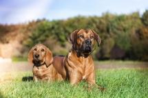 Laura-Fiederer Fotografie-Tierfotografie-Riedstadt-Hunde-4