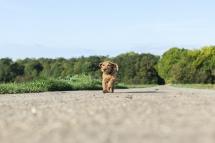 Laura-Fiederer Fotografie-Tierfotografie-Riedstadt-Hunde-5