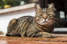Laura-Fiederer-Fotografie-Tiere-Tierfotograf-Tierfotos-Katze-Eimsheim-2